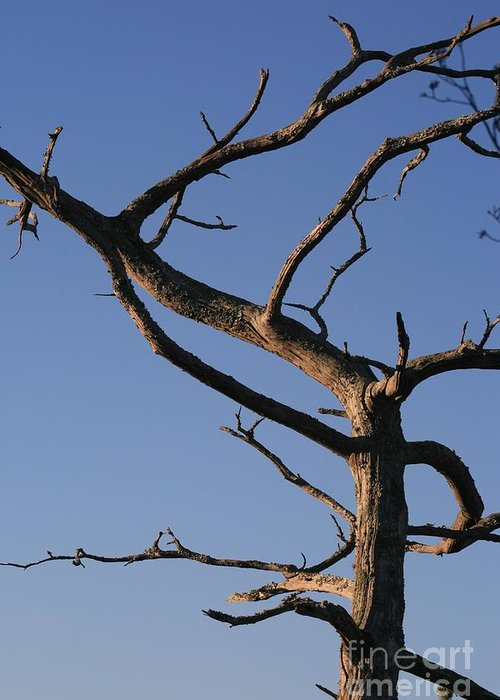 Tree Greeting Card featuring the photograph Gnarly Tree by Nadine Rippelmeyer