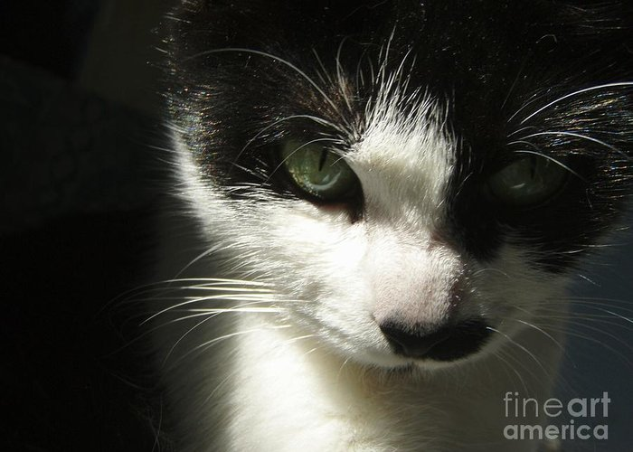 Cat Eyes Greeting Card featuring the photograph Go Ahead Make My Day by Kristine Nora