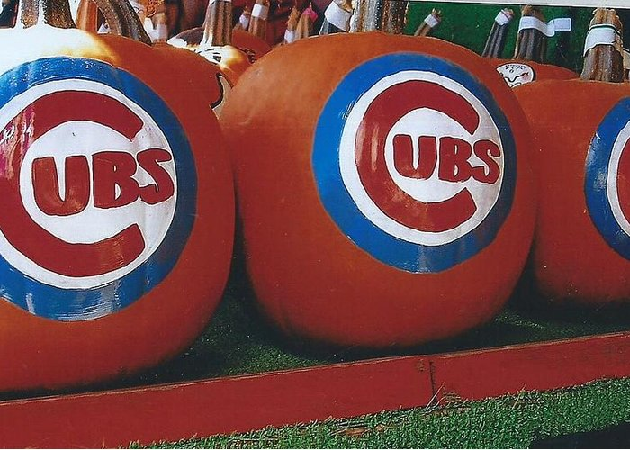 Pumpkins Painted With Cubs Logo Greeting Card featuring the photograph Go Cubs Chicago Celebrates by Jane Butera Borgardt