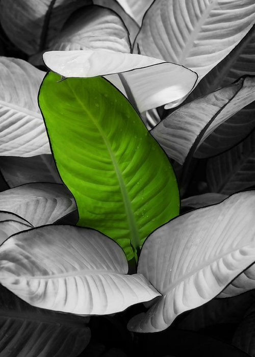 Leaf Greeting Card featuring the photograph Going Green - Dreamy by Marilyn Hunt