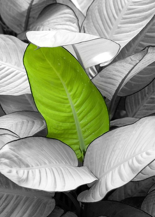 Leaf Greeting Card featuring the photograph Going Green Lighter by Marilyn Hunt