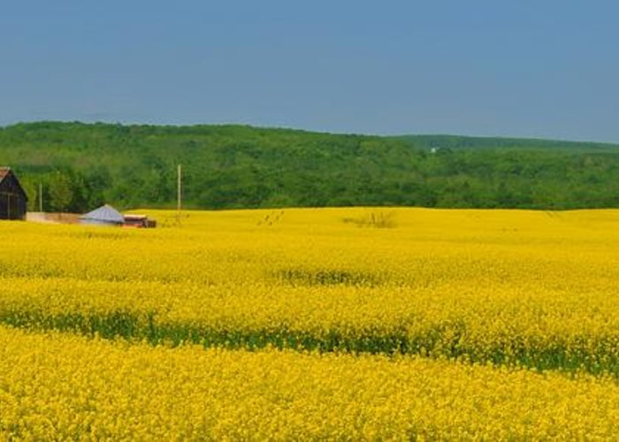 Rapeseed Greeting Card featuring the mixed media Gold Green And Blue by Bill Willemsen