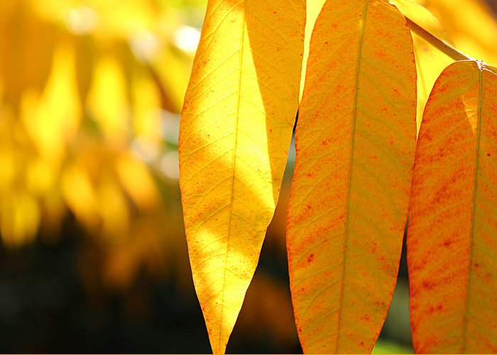 Maple Leave Greeting Card featuring the photograph Golden Accent by Loretta S