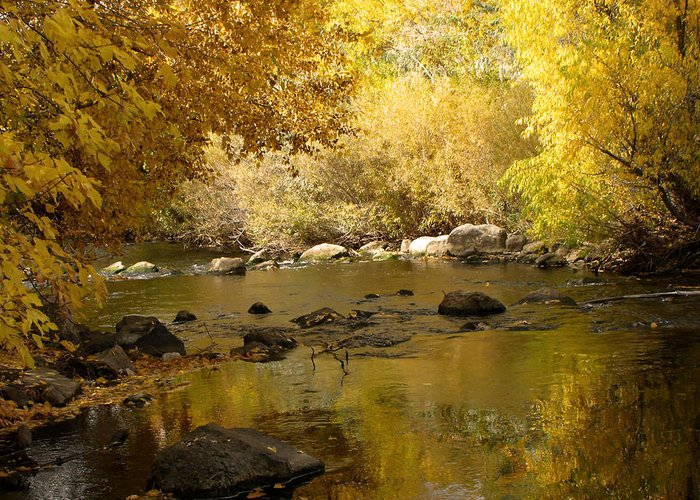 River Greeting Card featuring the photograph Golden Autumn Colors by Jan Tribe