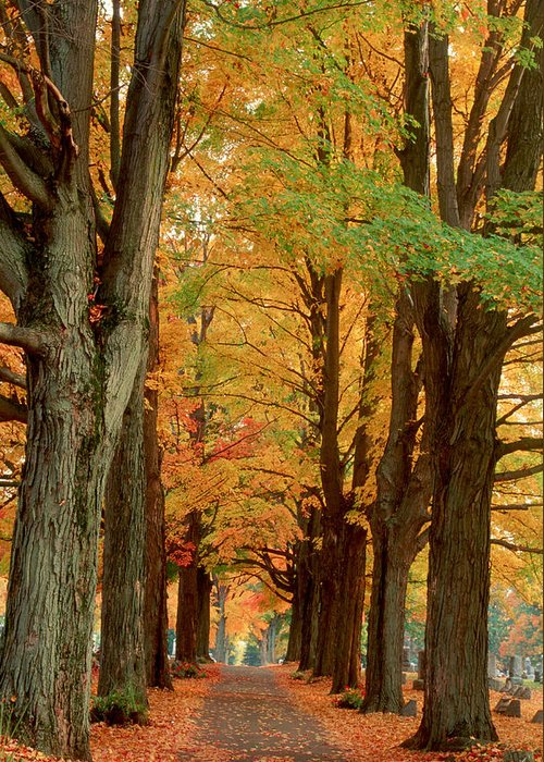 Fall Greeting Card featuring the photograph Golden Avenue by Raju Alagawadi
