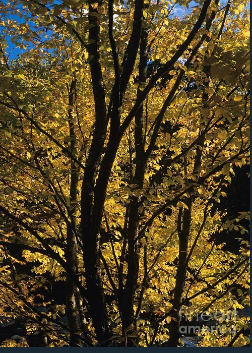 Autumn Greeting Card featuring the photograph Golden Colors Of Autumn In New England by Erin Paul Donovan