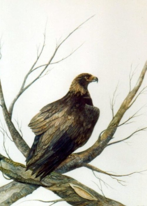 Eagle Greeting Card featuring the painting Golden Eagle by Ben Kiger