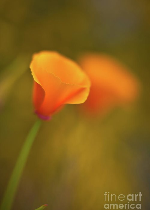 Golden Poppies Greeting Cards