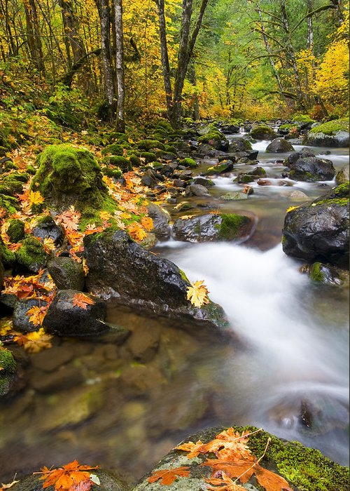 Fall Greeting Card featuring the photograph Golden Grove by Mike Dawson
