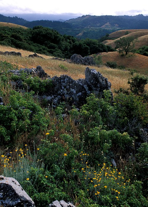 Landscape Greeting Card featuring the photograph Golden Hills Of Summer by Kathy Yates