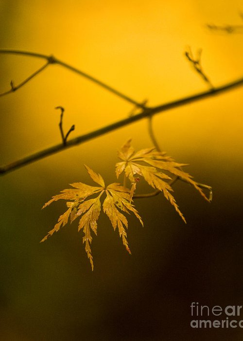 Golden Leaves.beauty Greeting Cards