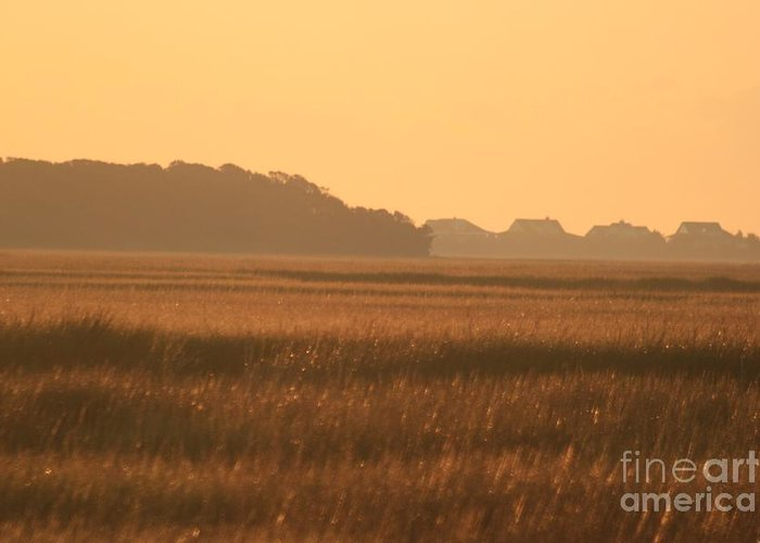 Marsh Greeting Card featuring the photograph Golden Marshes by Nadine Rippelmeyer