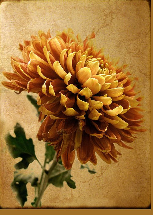 Flowers Greeting Card featuring the photograph Golden Mum by Jessica Jenney