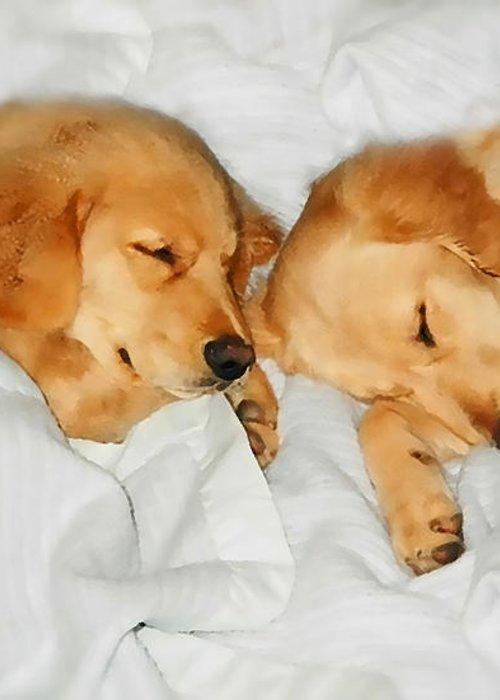 Golden Retriever Greeting Card featuring the photograph Golden Retriever Dog Puppies Sleeping by Jennie Marie Schell