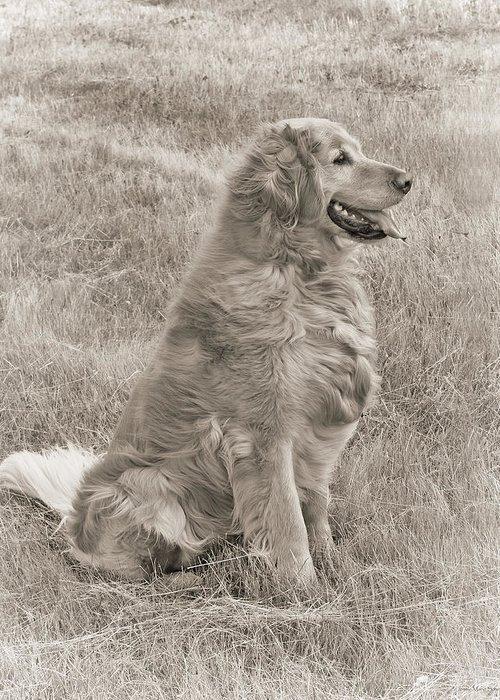 Golden Retriever Greeting Card featuring the photograph Golden Retriever Dog Sepia by Jennie Marie Schell