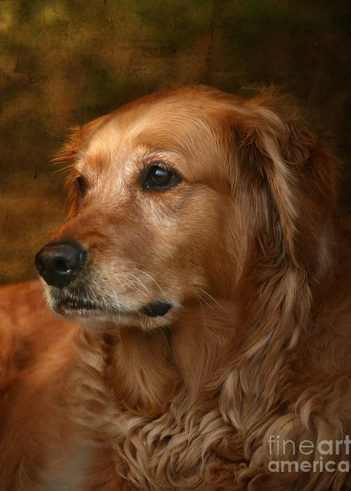 Golden Retrievers Greeting Cards