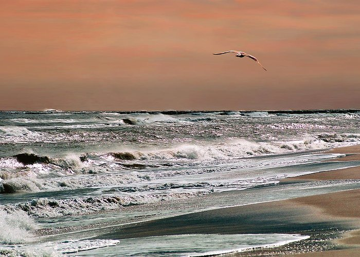 Seascape Greeting Card featuring the photograph Golden Shore by Steve Karol