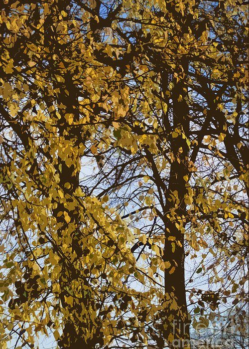 Autumn Greeting Card featuring the photograph Golden Tree 2 by Carol Lynch
