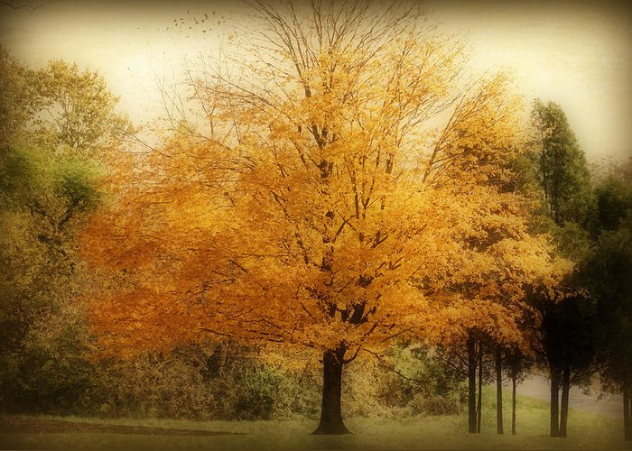 Landscape Greeting Card featuring the photograph Golden Tree by Sandy Keeton