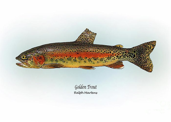 Golden Trout Greeting Card featuring the painting Golden Trout by Ralph Martens