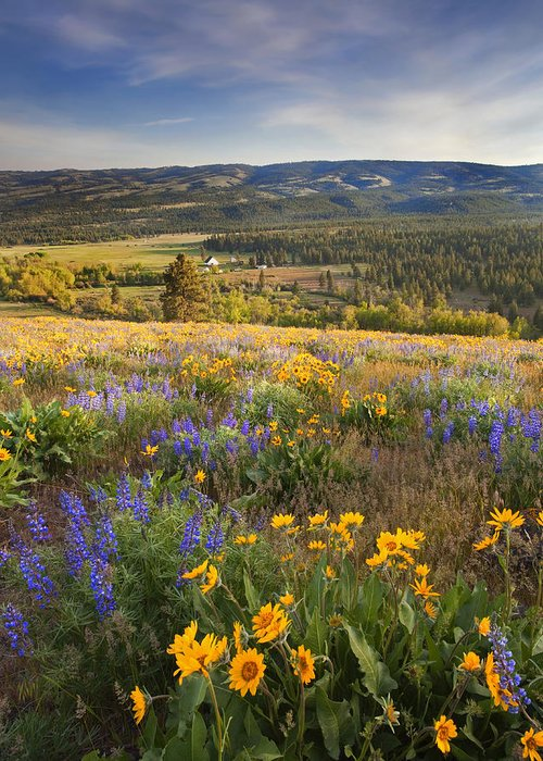 Wildflowers Greeting Card featuring the photograph Golden Valley by Mike Dawson
