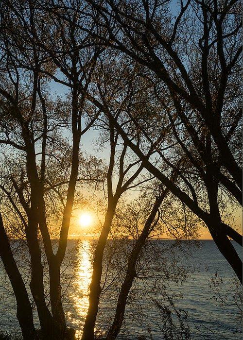Georgia Mizuleva Greeting Card featuring the photograph Golden Willow Sunrise - Greeting A Bright Day On The Lake by Georgia Mizuleva