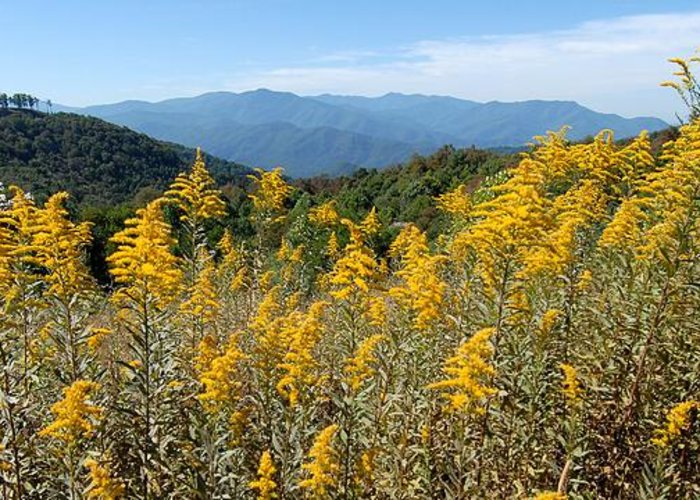 Mountain View Greeting Card featuring the photograph Goldenrod Mountain View by Alan Lenk