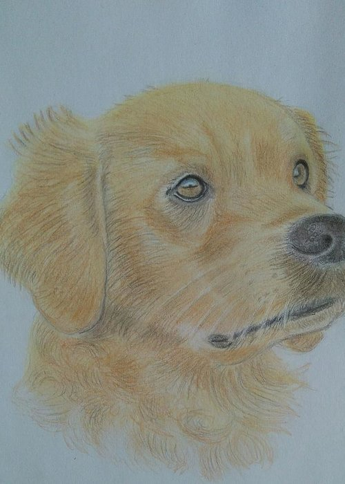 Dog Greeting Card featuring the drawing Goldie by Paul Blackmore