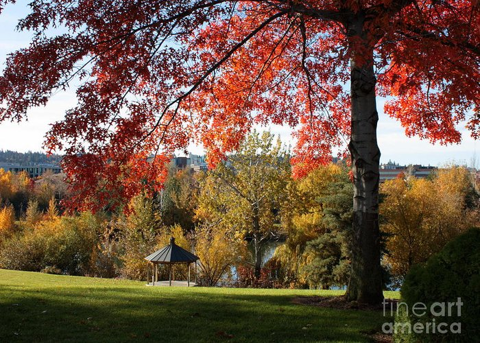Spokane Greeting Card featuring the photograph Gonzaga With Autumn Tree Canopy by Carol Groenen