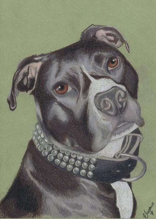 Pit Bull Greeting Card featuring the drawing Gonzo by Stacey Jasmin