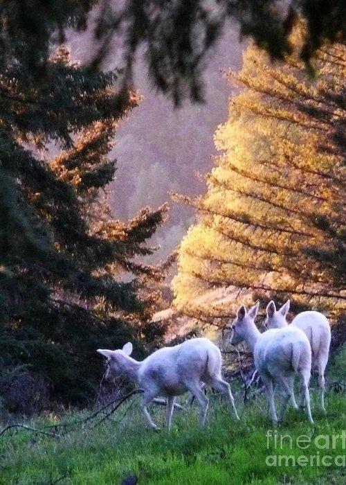 Deer Greeting Card featuring the photograph Good Omen by JoAnn SkyWatcher