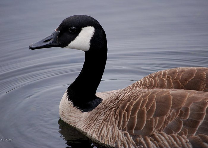 Goose Greeting Card featuring the photograph Goose Watching Me... by Michelle BarlondSmith