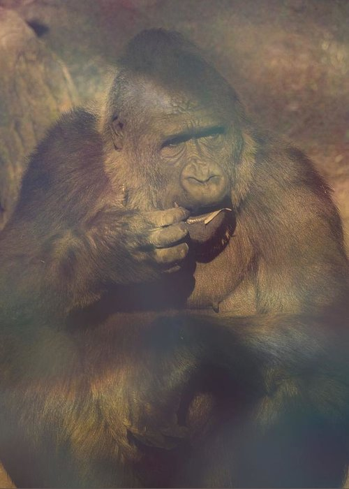 Gorilla Greeting Card featuring the photograph Gorilla In The Mist by Lori Seaman
