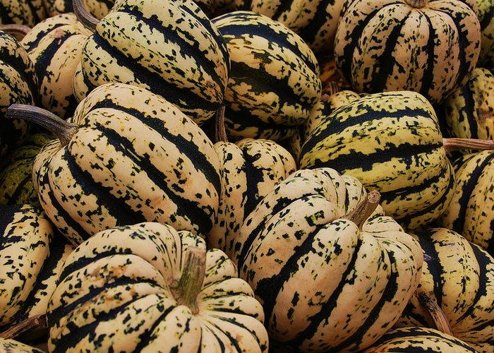Squash Greeting Card featuring the photograph Gourds In White And Green by Jame Hayes
