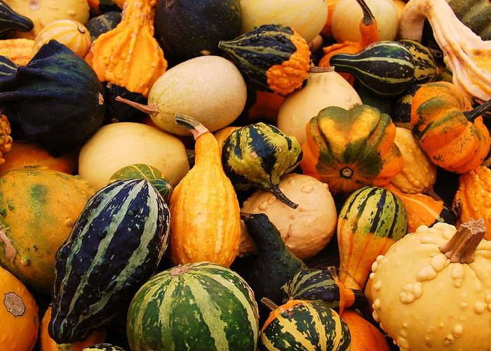 Squash Greeting Card featuring the photograph Gourds by Jame Hayes