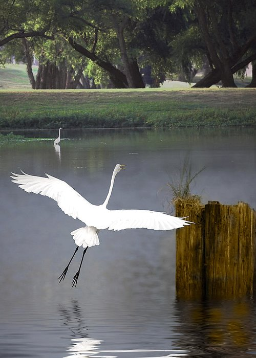 Egret Greeting Card featuring the photograph Graceful by Cecil Fuselier