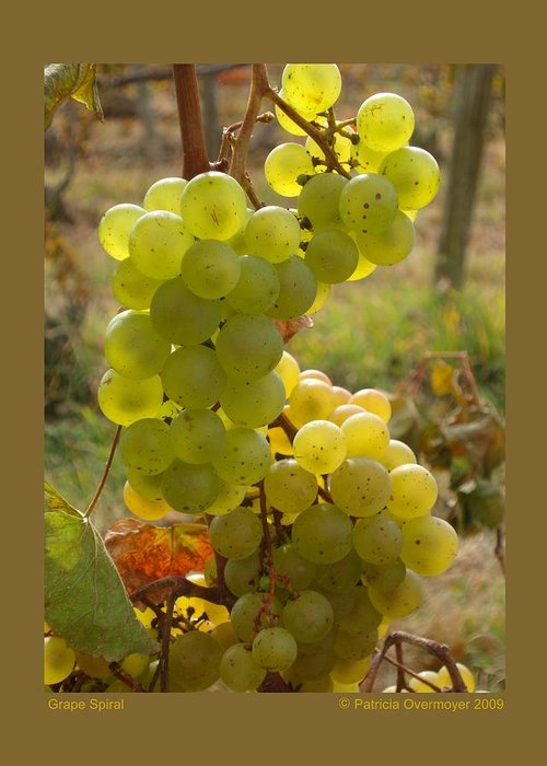 Grapes Greeting Card featuring the photograph Grape Spiral by Patricia Overmoyer