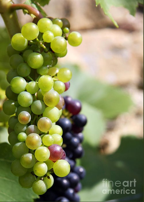 Agricultural Greeting Card featuring the photograph Grapes by Jane Rix