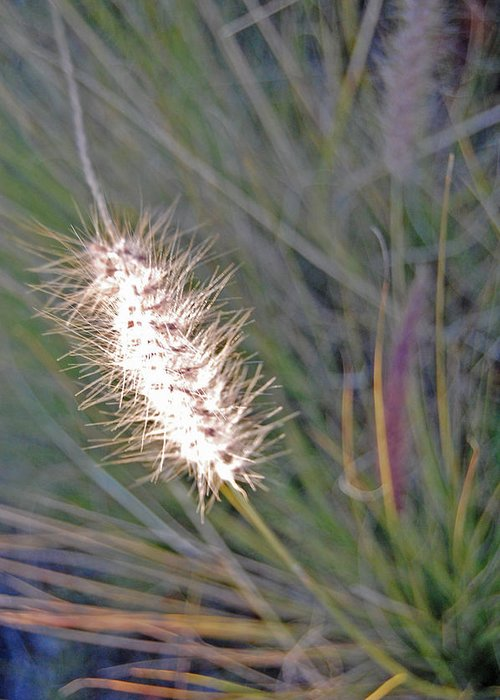 Grass Greeting Card featuring the photograph Grass Light by Jean Booth