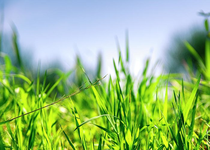 Grass Greeting Card featuring the photograph Grass by Nikos Stavrakas