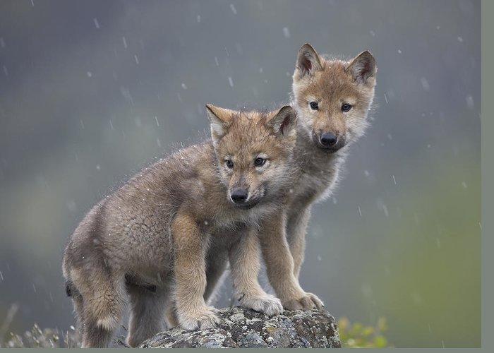 Baby Wolf Art Pixels