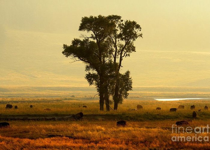 Lamar Valley Sunset Greeting Card featuring the photograph Grazing Around The Tree by Adam Jewell