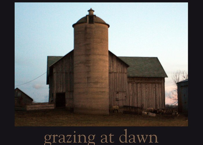 Barn Greeting Card featuring the photograph Grazing at Dawn by Tim Nyberg
