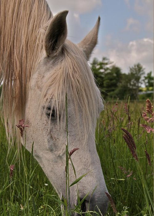 Horse Greeting Card featuring the photograph Grazing by Odd Jeppesen