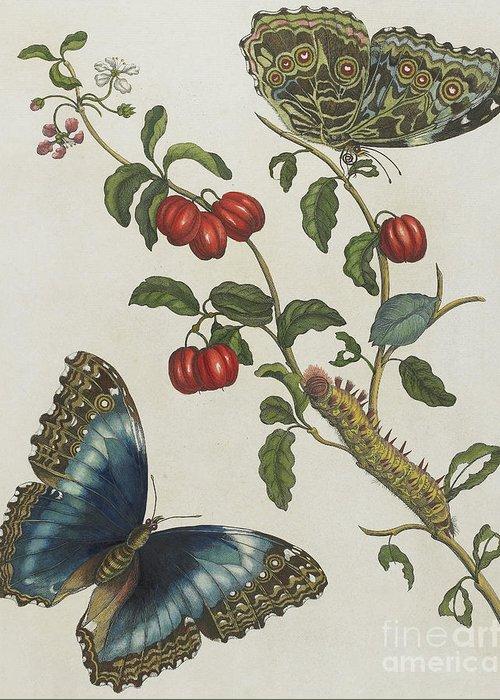 Vine Leaves Drawings Greeting Cards