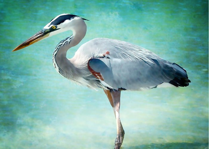 Heron Greeting Card featuring the photograph Great Blue Heron by Ellen Heaverlo