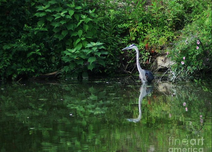 Lanscape Water Bird Crane Heron Blue Green Flowers Great Photograph Greeting Card featuring the photograph Great Blue Heron Hunting Fish by Dawn Downour