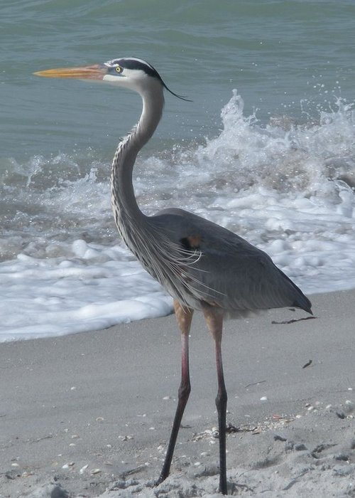 Grreat Blue Heron Greeting Card featuring the photograph Great Blue Heron by Jeanette Oberholtzer