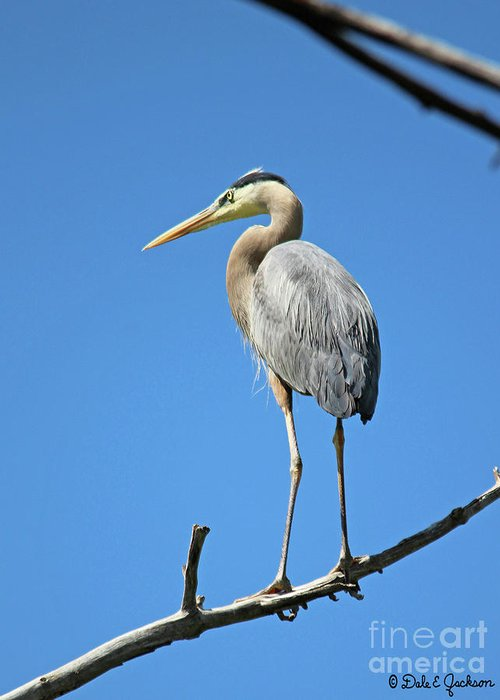 Heron Greeting Card featuring the photograph Great Blue Heron Watching And Waiting by Dale E Jackson