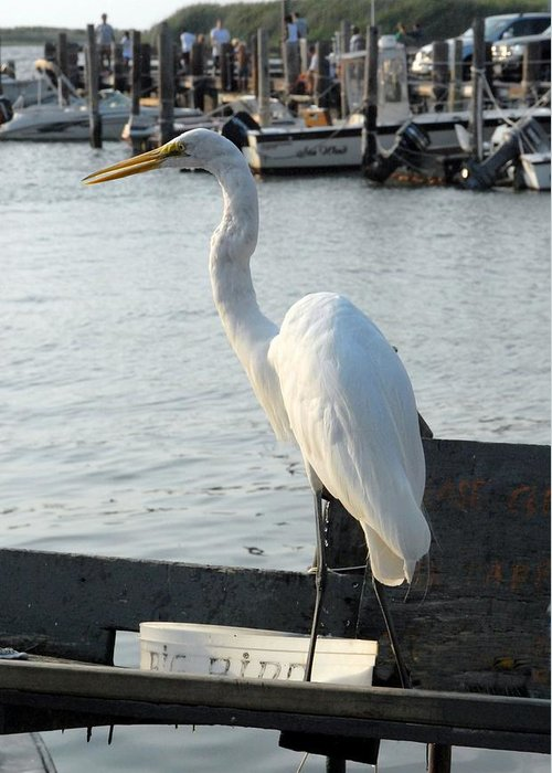 Great Egret Greeting Card featuring the photograph Great Egret 25 by Joyce StJames